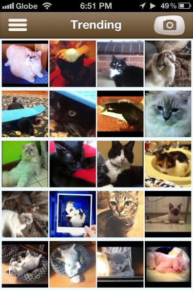 Trending photos in Show My Cat